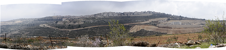 The hilltops surrounding the Tent of Nations farm are all covered by Israeli settlements. PHOTO: ELLEN DAVIDSON